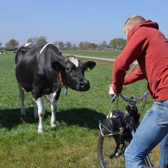 Solex toertocht en een kijkje nemen bij de koeien op een melkveebedrijf.