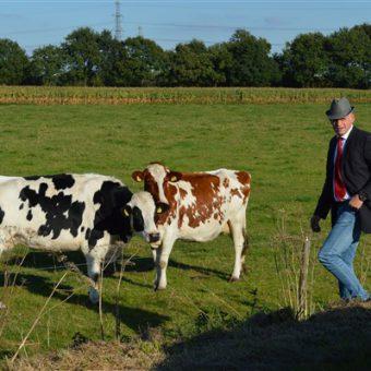 Daf toertocht over het Drentse platteland. Onderweg een kijkje nemen bij de koeien in de wei.