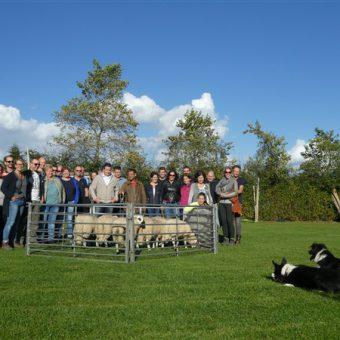 Leuk en leerzaam dagje uit in Drenthe; samen leren schapen drijven tijdens een originele workshop.
