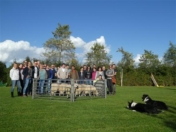 Schapen drijven in Drenthe bij Het Drents kwartiertje 22 - Het Drents Kwartiertje - Solex Huren / Rijden - Dafje Huren / Rijden - Groepsactiviteiten, workshops, teambuilding en trainingen Drenthe