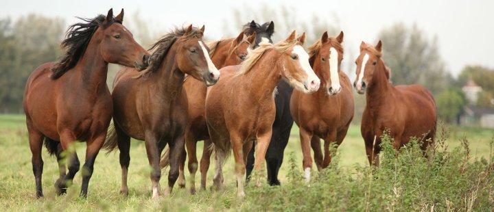 Systemisch werken met paarden - Het Drents Kwartiertje - Solex Huren / Rijden - Dafje Huren / Rijden - Groepsactiviteiten, workshops, teambuilding en trainingen Drenthe