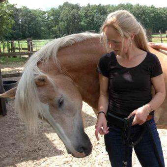 Samenwerking en communicatie tijdens teambuilden met paarden.