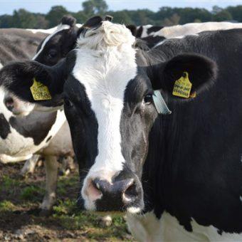 Rondleiding over de boerderij door de boer of boerin. Leuk en leerzaam uitje in Drenthe.