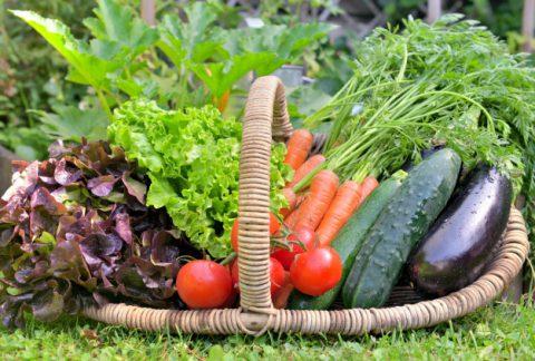 mand vol met verse groenten voor een vegatable tuin 100787 848 - Het Drents Kwartiertje - Solex Huren / Rijden - Dafje Huren / Rijden - Groepsactiviteiten, workshops, teambuilding en trainingen Drenthe