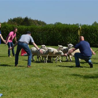 Schapen drijven workshop; leuke en leerzame invulling voor teamuitje of personeelsdag in Drenthe.