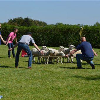Schapen drijven workshop; leuke en leerzame invulling voor teamuitje of personeelsdag in Drenthe.