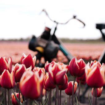 solex toertocht 10 - Het Drents Kwartiertje - Solex Huren / Rijden - Dafje Huren / Rijden - Groepsactiviteiten, workshops, teambuilding en trainingen Drenthe
