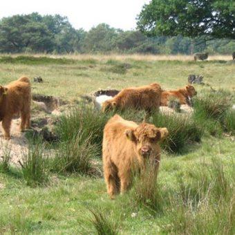 Op de tandem door Drenthe, door oude dorpjes en over uitgestrekte heidevelden.