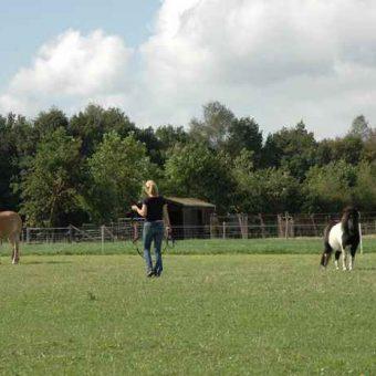 Teambuilden met paarden. Samen met de paarden aan de slag tijdens deze teambuilding.